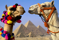 How many camels is your girlfriend worth?