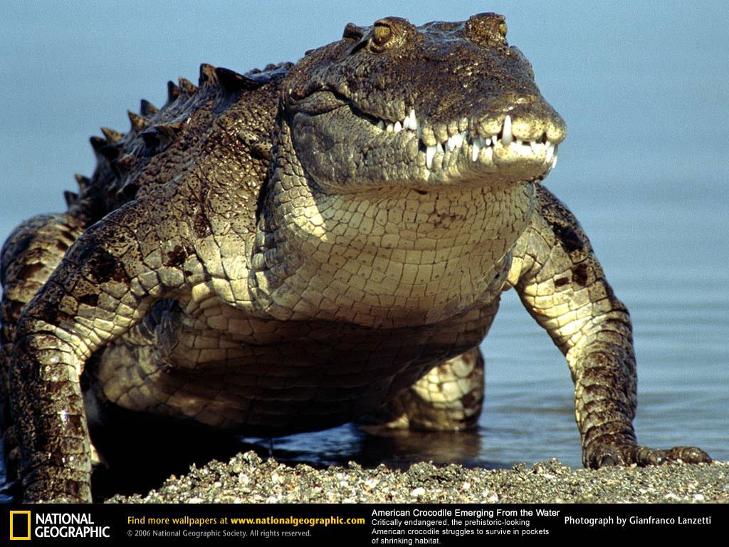 30 feet long crocodiles in South Florida | WC News - World ...