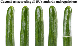 Cucumber according all EU regulations