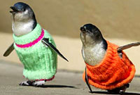 Gay Penguins, some priests and Survivor reality show