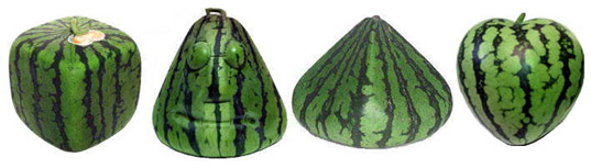 Different kind od watermelons