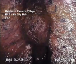 Bizzare Creature In North Carolina Sewer