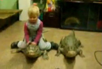 4 years old girl playing with crocodiles (Video)