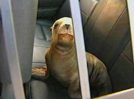 Baby sea lion caught on freeway in San Francisco
