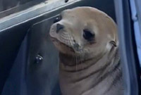 Baby sea lion rescued on freeway